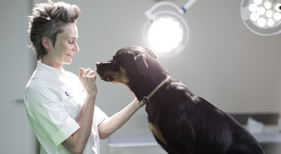 Veterinarian with dog in light